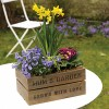 Mother's Day gifts: planted flower arrangements