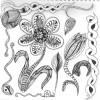 Spring Zentangle Inspired Art