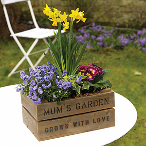 fab mums » mother's day gifts: planted flower arrangements